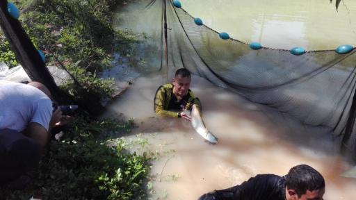 Pescador sosteniendo Arawana