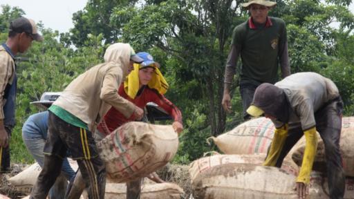 Arroceros en La Mojana afirman estar al borde de la quiebra