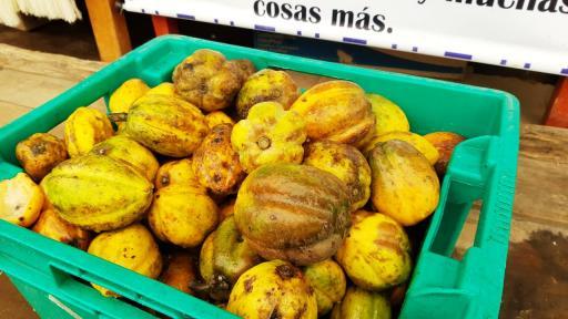 El encanto del chilacuan y la mora de El Encano en Pasto