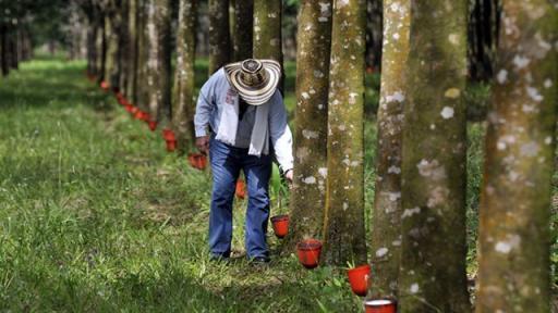 Foto: Ministerio de Agricultura